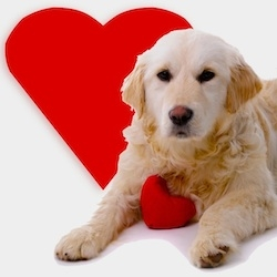 draft_lens19020099module156055575photo_1326292259dog-valentine-gift-pets-g
